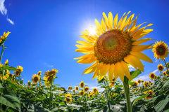 夏は基礎代謝が低下する⁉️